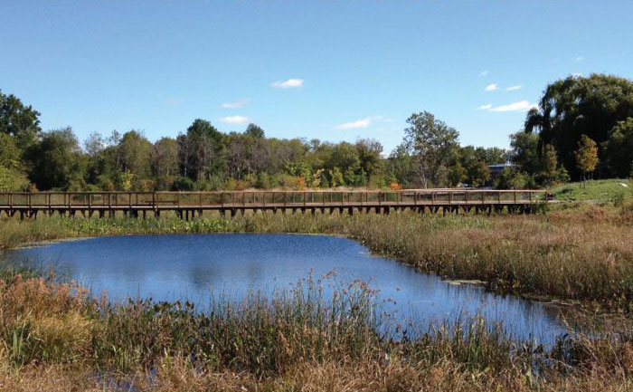 Alewife Constructed Wetland - Oct 2013